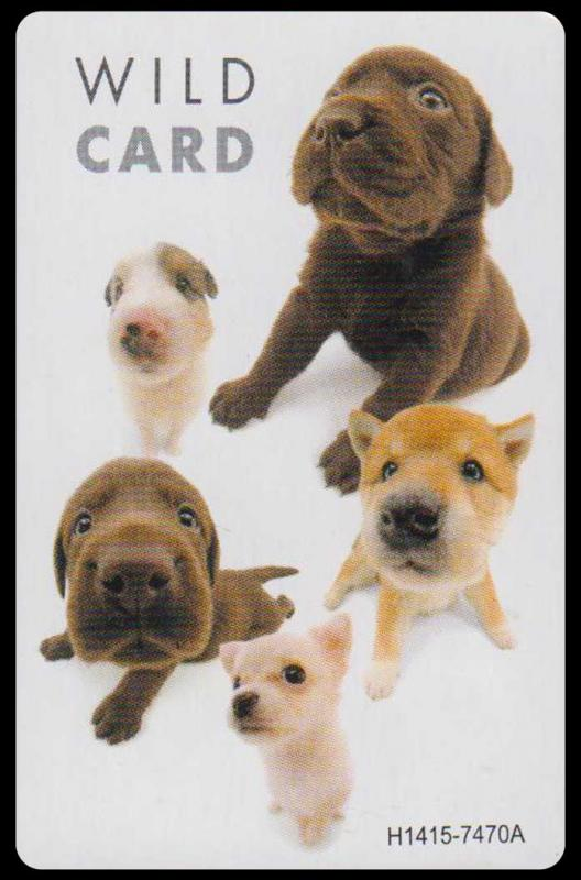 The Dog - patience playing cards